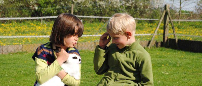 Streichelzoo - Kaninchen